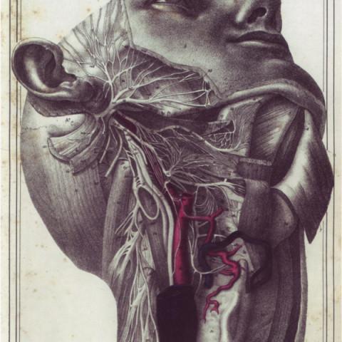 vagus nerve cloquet